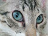 3,5 Aylık Dobby Yeni Sahibini Arıyor :)