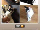 BERY-evcil hayvansever olan ve bu küçük yaratıkla ilgilenmek isteyen var mı?