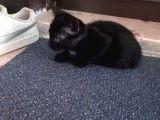 Henüz annesini emen üç haftalık dişi kedi