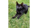 Yavru siyah sokak kedisi - tek gözü alındı