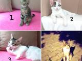 Acil yavru kedilere Sahip