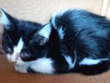 Hasta kedi sahiplendirme