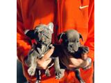 Blue quad yavrular