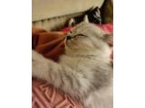 Üretim değil ev kedisi