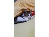 İç dış paraziti tam 3.5aylık erkek kedi