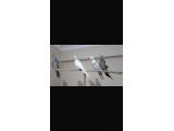 0-45 günlük sultan papağanları 3 adet ve 4 aylık sultanlar