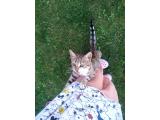 4 aylık kedi yuva arıyor