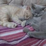 Mia&Leo